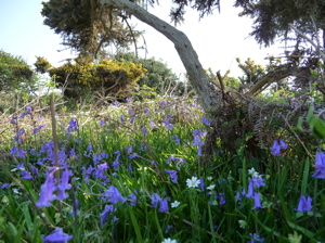 Cliff top - spring