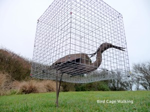 Bird Cage Walking